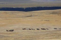бежать лошадей одичалый стоковое изображение