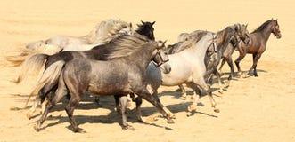бежать лошадей Стоковая Фотография RF