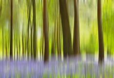 Бежать через bluebells Стоковое фото RF