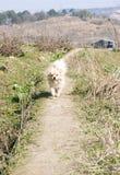бежать щенка поля одичалый Стоковое фото RF