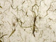 бежевая handmade бумага Стоковая Фотография