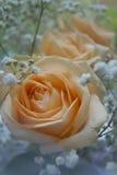 бежевые цветки Стоковые Фотографии RF
