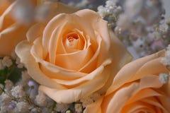 бежевые цветки Стоковое Изображение RF