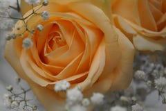 бежевые цветки Стоковая Фотография