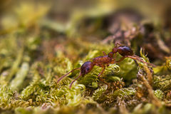 Бежит муравей Стоковое Изображение