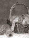 бездействие щенка партии Стоковая Фотография RF