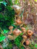 Бездельник и грибы стоковая фотография