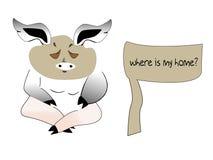 бездомная свинья Стоковое Фото