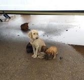 Бездомная семья собаки после дождя стоковое фото rf