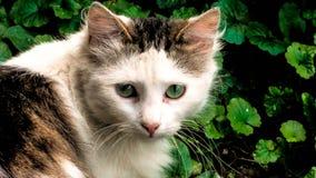 Бездомная слойка кота в дворе стоковое изображение