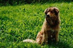 Бездомная собака в малой деревне стоковые фото