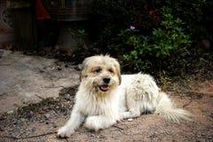 Бездомная собака на улицах стоковая фотография rf