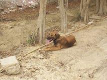 Бездомная собака принимая остатки a в пустыне стоковое фото
