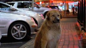 Бездомная собака сидит на улице города вечером на предпосылке проходить автомобили и людей акции видеоматериалы