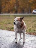 Бездомная собака стоковые изображения