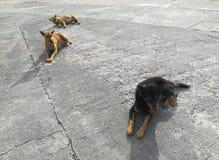 3 бездомной собаки сидят вниз на конкретном поле Стоковые Фото