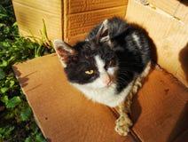 Бездомные как и кот 2 повреждения рассеянный Стоковое Фото