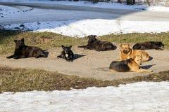 Бездомные собаки в топлении зимнего времени на колодце sanitaryware помехи Стоковая Фотография
