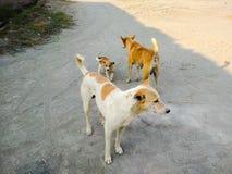 Бездомные собаки совместно Стоковые Изображения