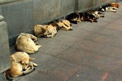 Бездомные собаки спать на тротуаре Стоковые Изображения