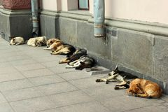 Бездомные собаки спать на тротуаре Стоковое Фото