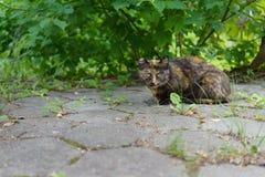 Бездомный животный кот сидит под зеленым кустом на улице и взглядах умышленно стоковые фото
