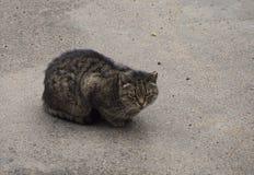 Бездомный коричневый кот в сидеть на улице стоковое фото rf