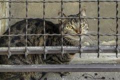 Бездомный кот за барами Стоковое фото RF