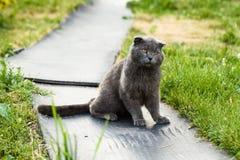 Бездомный кот с заболеванием уха Стоковая Фотография RF