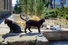 3 бездомных кота на улицах города Стоковое Изображение RF