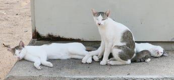 3 бездомных кота Стоковые Изображения