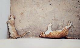 2 бездомных красных с волосами кота спать в тени дома Стоковая Фотография RF