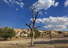 Безжизненное дерево 1 Стоковые Фотографии RF