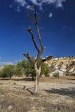 Безжизненное дерево 2 Стоковое фото RF