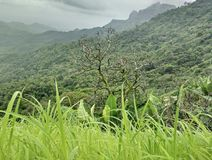Безлистное дерево стоковая фотография rf