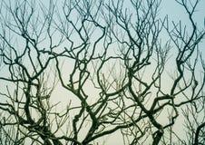 Безлистные ветви дерева против неба Стоковые Изображения RF