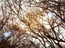 Безлистные ветви дерева против неба Стоковая Фотография