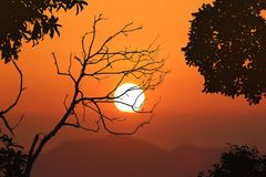 Безлистные деревья и красная предпосылка захода солнца неба Стоковые Фотографии RF