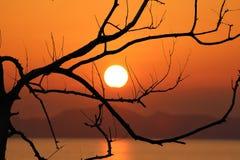 Безлистные деревья и красный заход солнца неба в вечере Стоковая Фотография