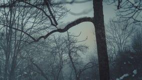 Безлистный сезон дерева весной стоковые изображения rf