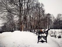 Безмолвие в зиме стоковые изображения