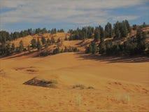 Безмолвие пустыни стоковое изображение rf