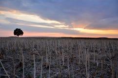 Безмолвие, мир, заход солнца и одно дерево Стоковое Изображение RF