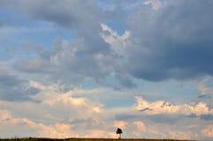 Безмолвие, мир, и одно дерево на широком горизонте Стоковое Изображение RF