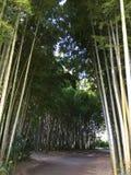 Безмолвие на бамбуковом пути леса Стоковая Фотография