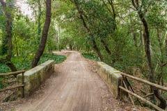 Безмолвие дороги в лесе Стоковые Изображения