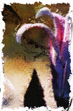 Безмолвие цветка лилии Стоковые Изображения RF