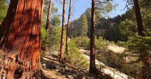 Безмятежность в древесинах Стоковое фото RF