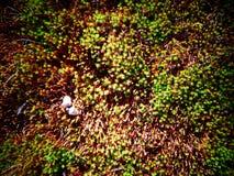 Безмятежность мха и жолудя стоковые фотографии rf