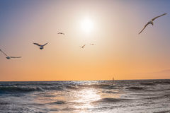 Безоблачный заход солнца на Тихом океане Стоковые Изображения RF
